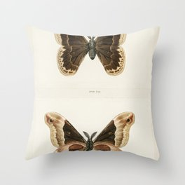 Promethea Silkmoth - Male (Attacus Promethia) from Moths and Butterflies of the United States (1900) Throw Pillow