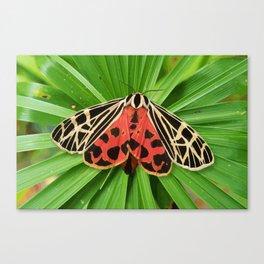 Scarlet Winged Lichen Moth Animal Print Canvas Print