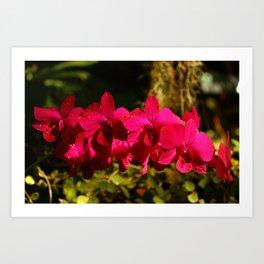 Lovely As An Orchid Art Print