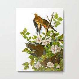 Carolina Pigeon Vintage Illustration Metal Print