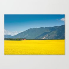 Canola farm Canvas Print