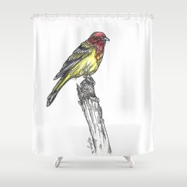 Sir Tanager Shower Curtain
