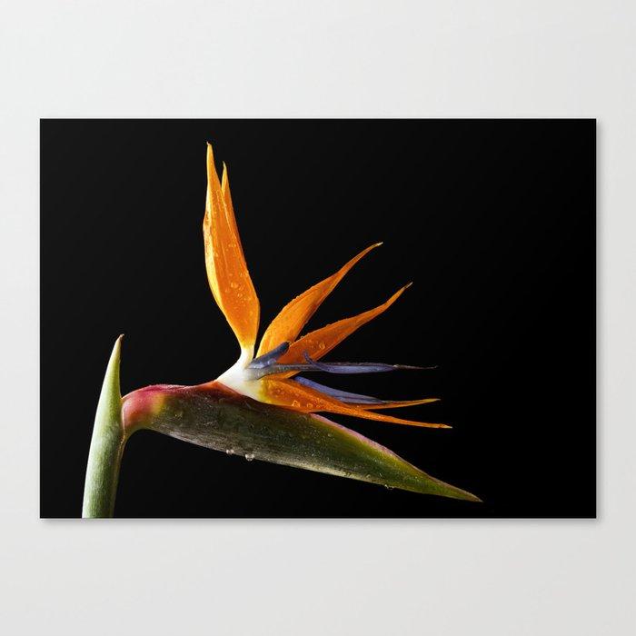 Bird of Paradise Flower Leinwanddruck