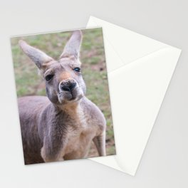 Cheeky Stationery Cards