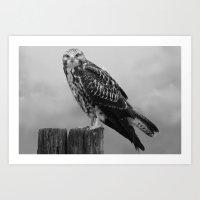 hawk Art Prints featuring Hawk by StaticHaven