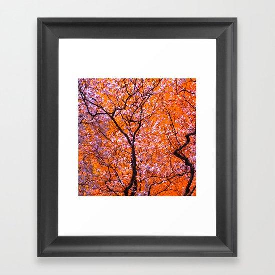 autumn tree IX Framed Art Print