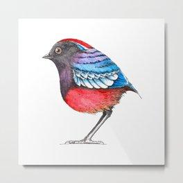 Bird: Garnet Pitta Metal Print