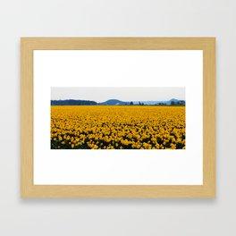 Daff Framed Art Print
