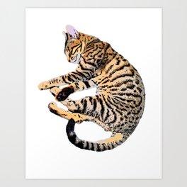 Bengal Kitty Nap Art Print
