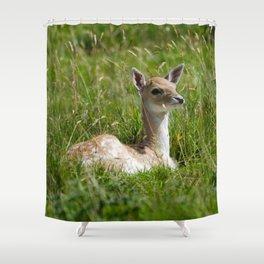 Fallow deer fawn Shower Curtain