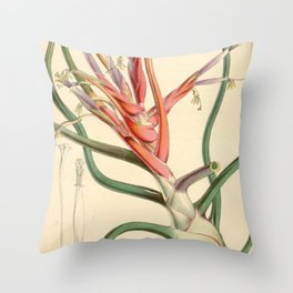 Tillandsia bulbosa var. picta Throw Pillow