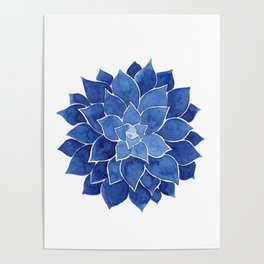 Indigo Succulent |  Watercolor Painting Poster