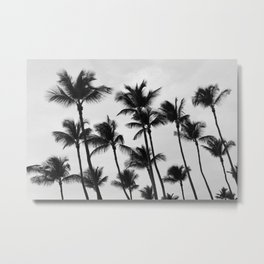 Black and White Palm Trees in Aruba Metal Print