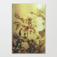 love for spring  Canvas Print