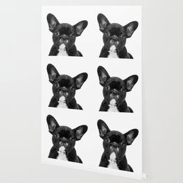 Black and White French Bulldog Wallpaper