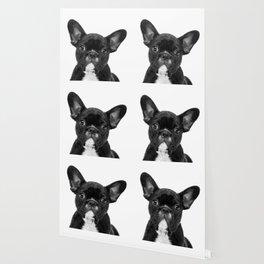 Black and White French Bulldog Wallpaper