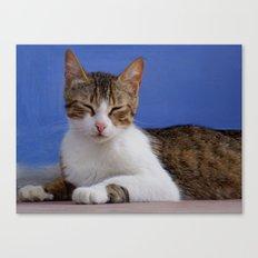 Greek Cat - Stella Canvas Print