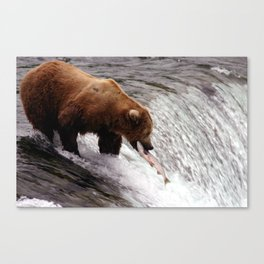 Bear Catching Salmon - Wildlife Photography Canvas Print