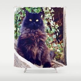 The King of cats Pomponio Mela Shower Curtain