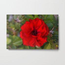 Vibrant Red Flower Metal Print