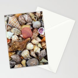 Seashell Collection from Florida Stationery Cards