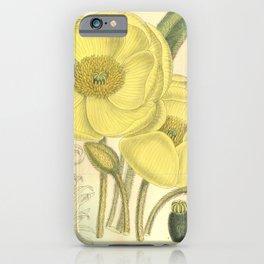 Flower 8027 meconopsis integrifolia iPhone Case