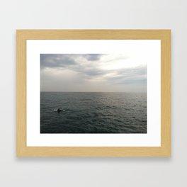 Newport Beach Dolphin Framed Art Print