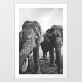 Elephant Buds Art Print