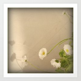 Daisy in the evening Art Print