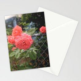Rosebush Stationery Cards