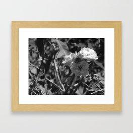 Depth of Field - Natural Growth Framed Art Print