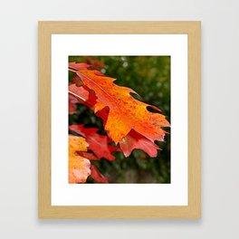 leaves in Autumn Framed Art Print