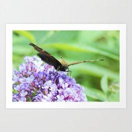 Butterfly X Art Print