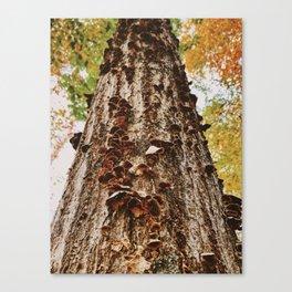 Autumn Tree Mushrooms Canvas Print