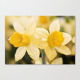 Tête-à-Tête Daffodil Canvas Print