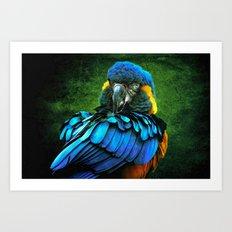 Blue Macaw Art Print