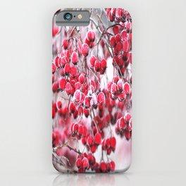 Icy Rowan Red Berries Winter Scene #decor #society6 #buyart iPhone Case