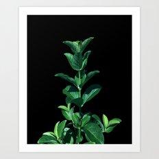 Leaves Viburnum Art Print