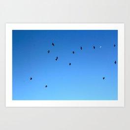 Bird Plane THREE Art Print