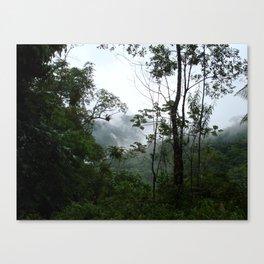 Foggy brazilian forest Canvas Print
