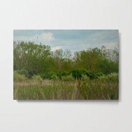 Tall Grass Metal Print