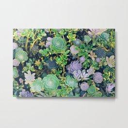 Succulents, plants Metal Print