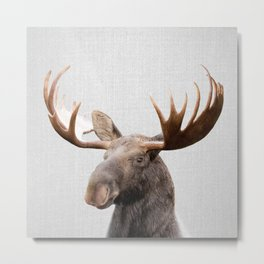 Moose - Colorful Metal Print