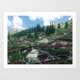 Rocky Mountain Lupine Art Print