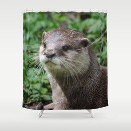 Asian short clawed otter Shower Curtain