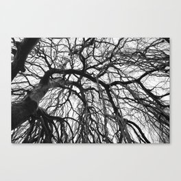 Tree in b&w Canvas Print