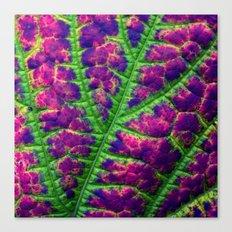 leaf abstract III Canvas Print