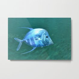 Fish Metal Print