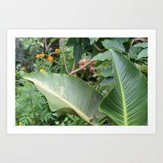Costa Rica Palm Art Print