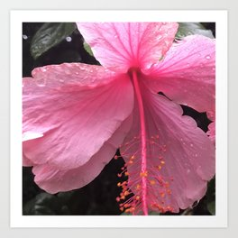 Dewdrops on Tropical Pink Flower Art Print